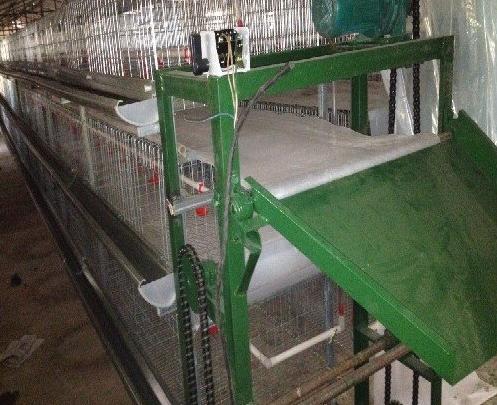蛋鸡设备传送带式清粪机常见的这些问题你都知道吗?