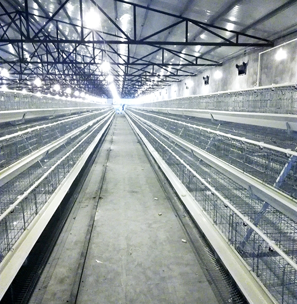 阶梯式蛋鸡设备