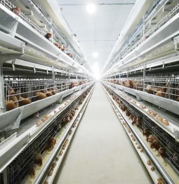 全自动养鸡设备