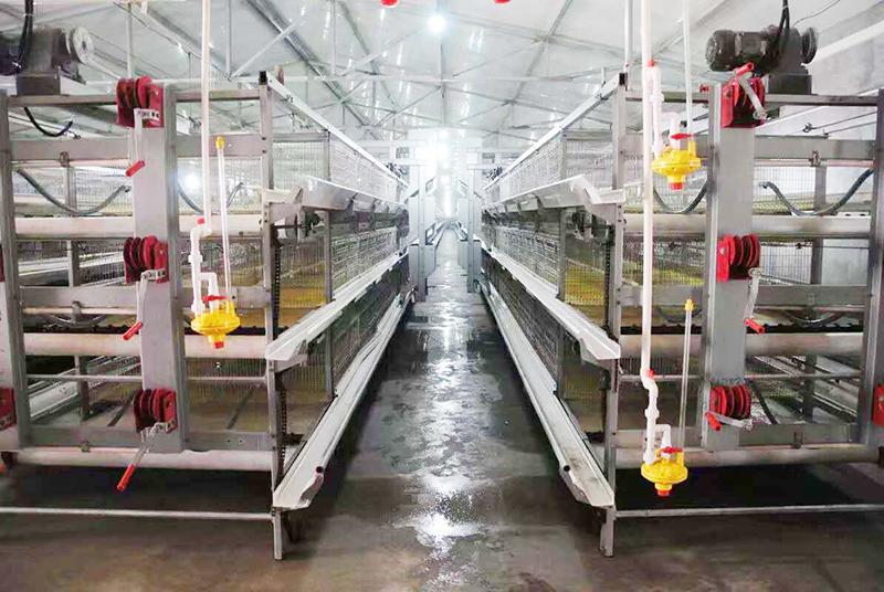 肉鸡行情,及养殖肉鸡设备